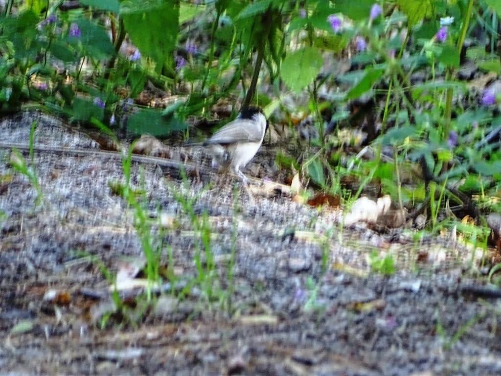 Perehod - wyprawa na ścieżkę ornitologiczną w Poleskim Parku Narodowym 5
