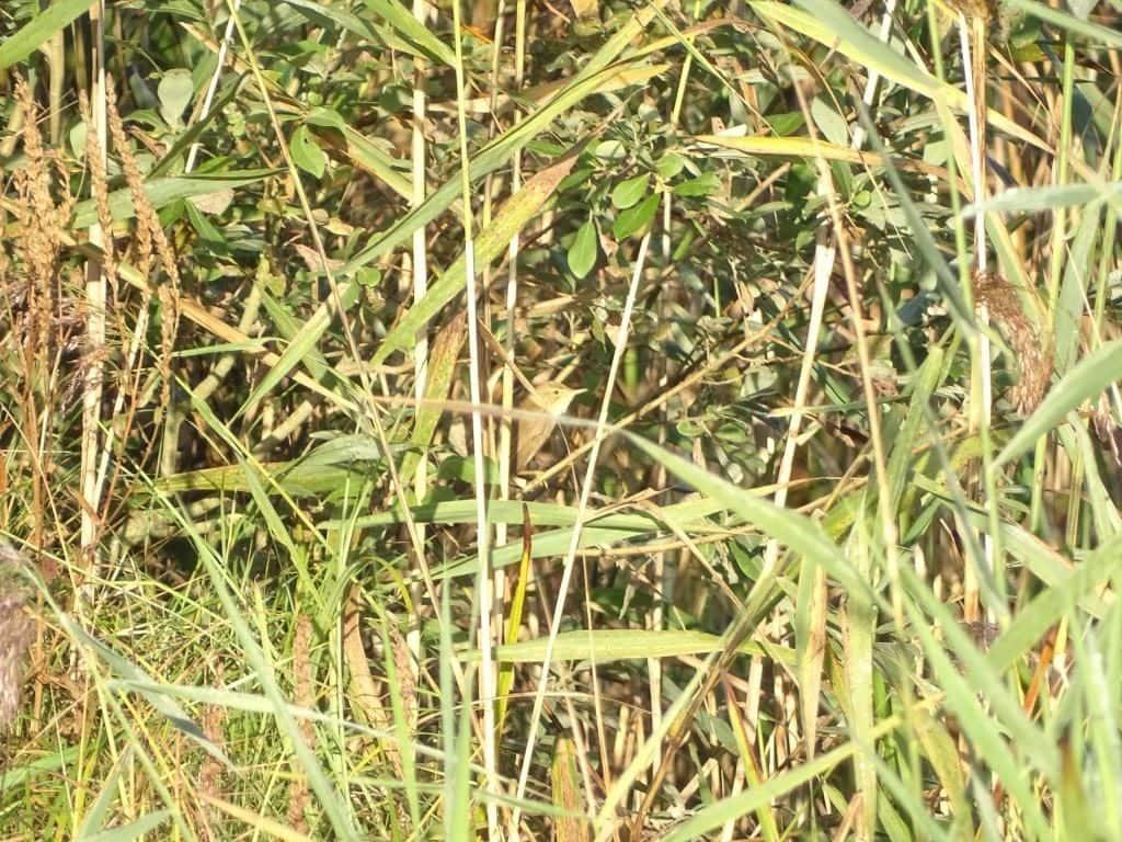 Poleski Park Narodowy - biwak 3