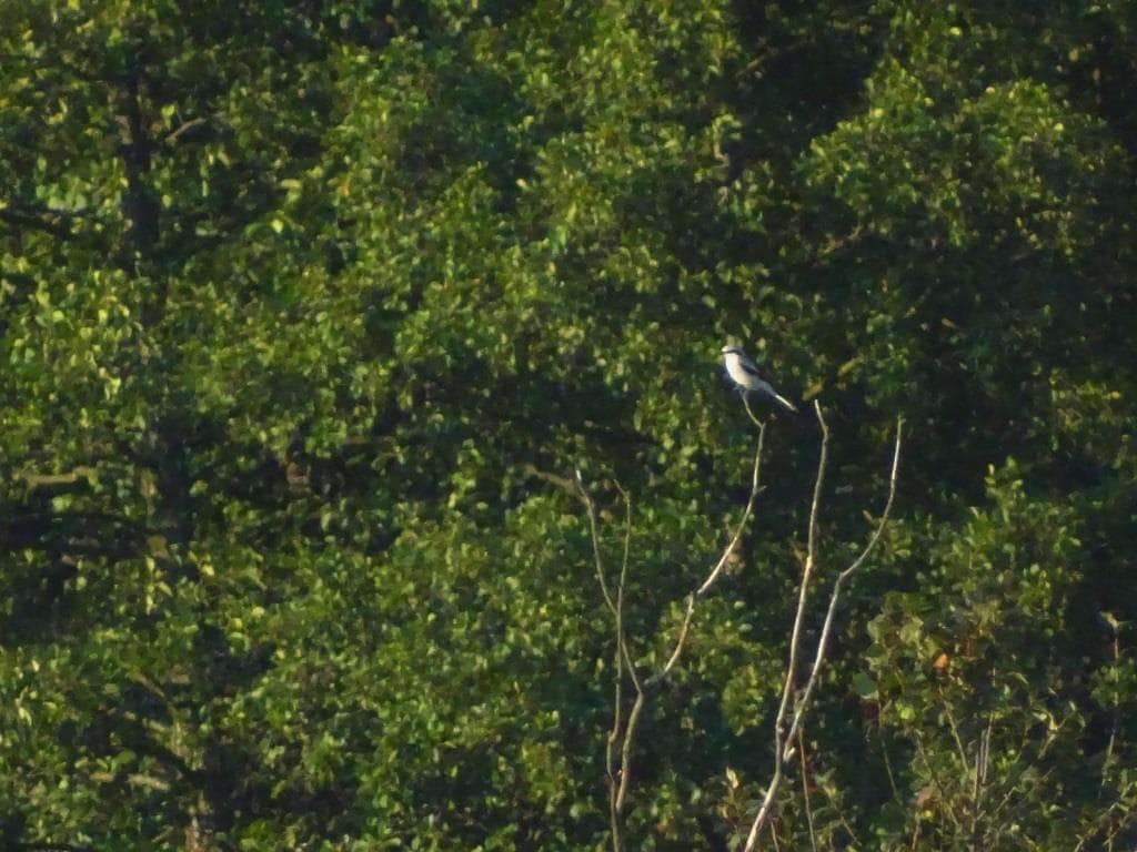 Poleski Park Narodowy - biwak 17