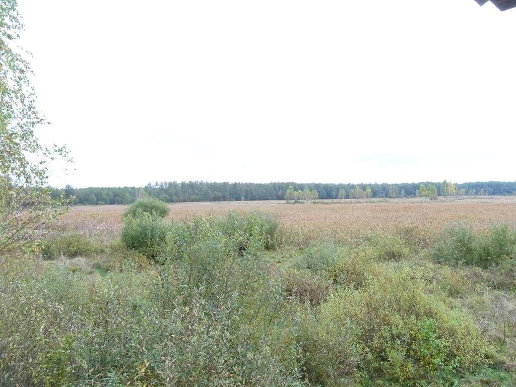 Łąka jeleni