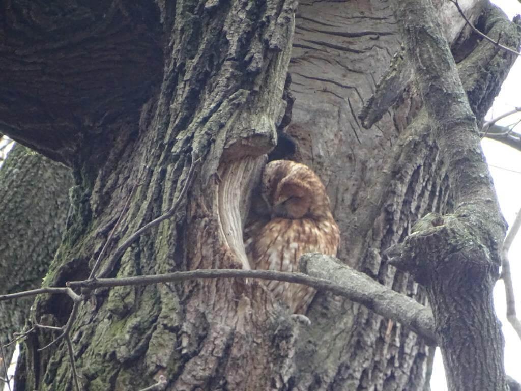 Ptaki Warszawy - czyli spacer  ornitologiczny po stolicy 10