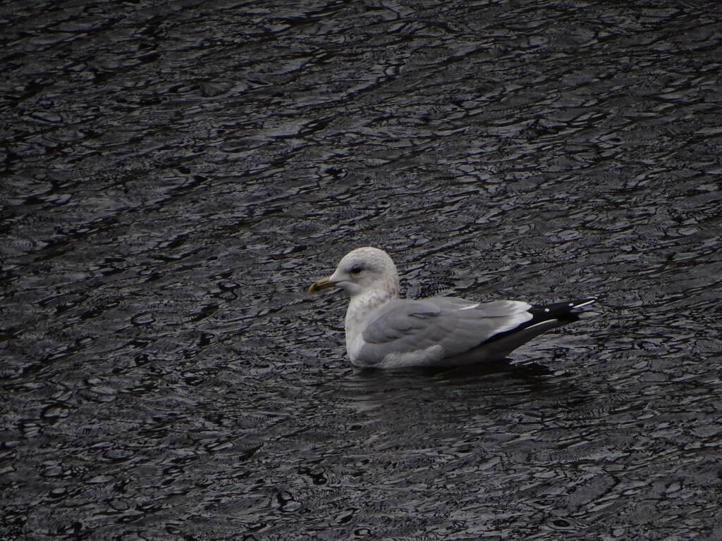Ptaki Warszawy - czyli spacer  ornitologiczny po stolicy 12