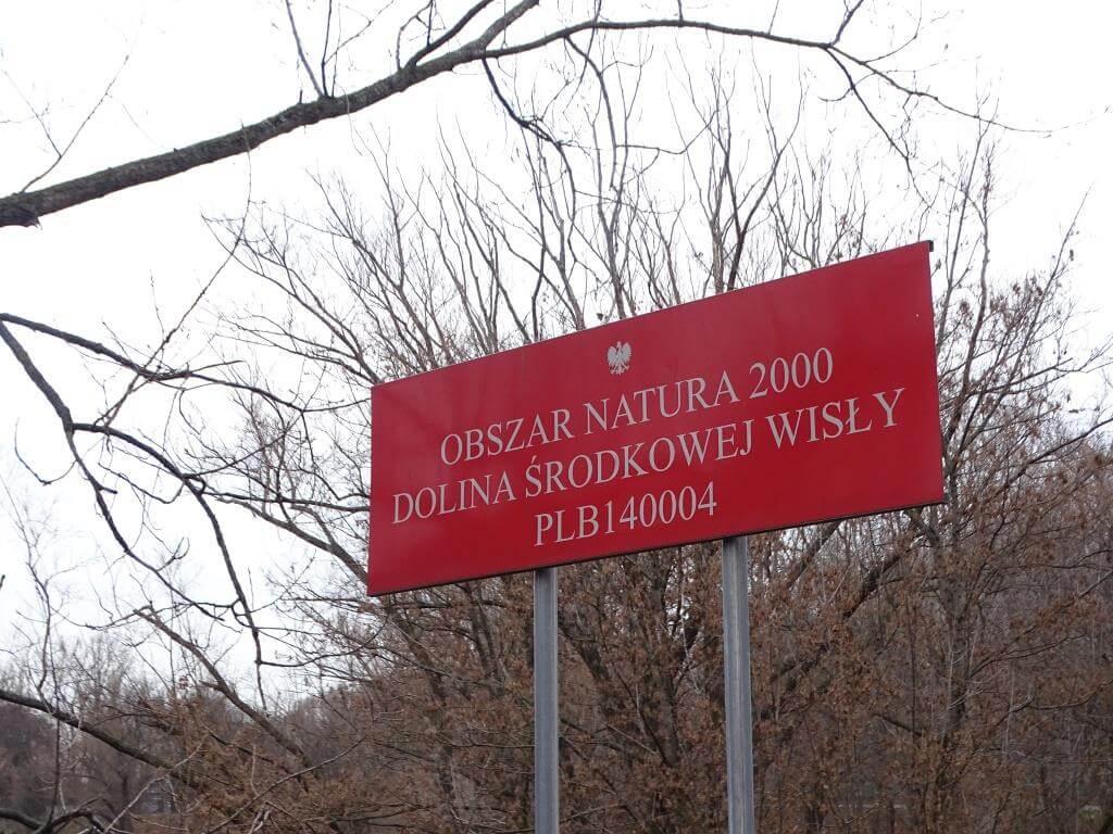 Ptaki Warszawy - czyli spacer  ornitologiczny po stolicy 4