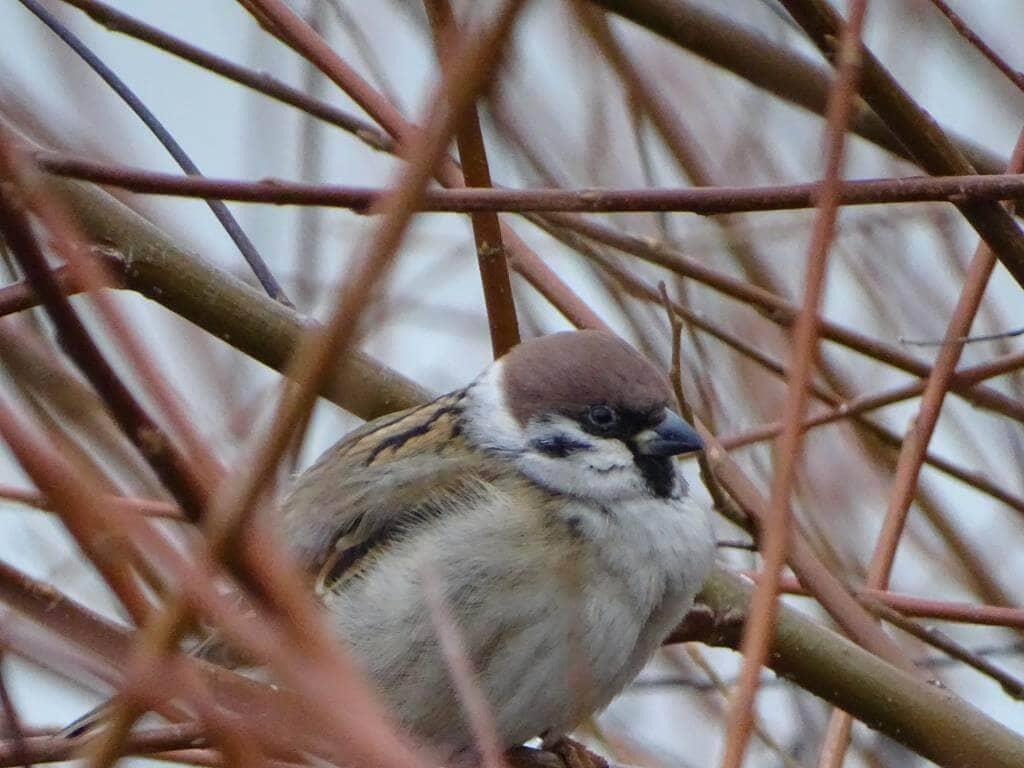 Ptaki Warszawy - czyli spacer  ornitologiczny po stolicy 14
