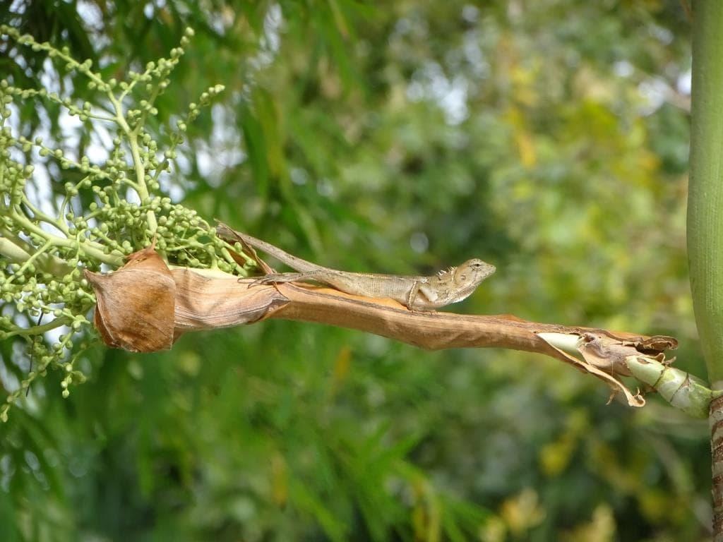 Jaszczurka w dżungli - Tajlandia