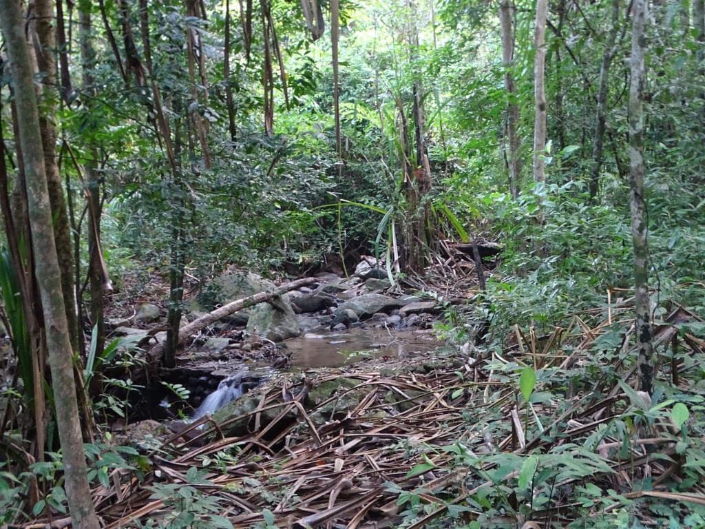 Strumień w środku dżungli
