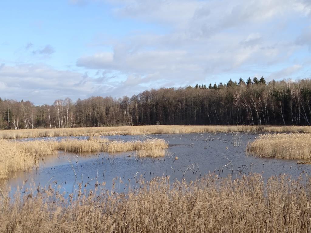 Poleski Park Narodowy - Ścieżka przyrodnicza Perehod zimą