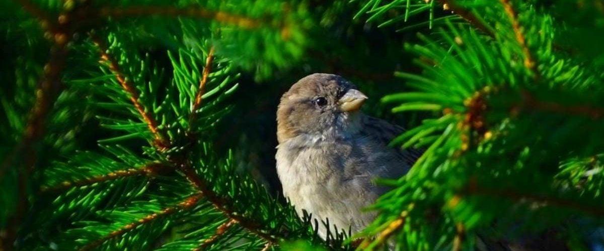 udokumentowane obserwacje ptaków