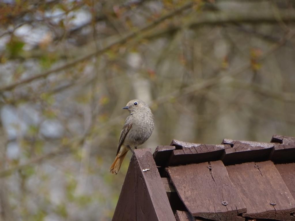Birdwatching w Poleskim Parku Narodowym 32