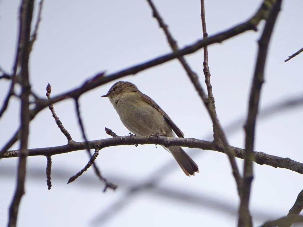 Birdwatching w Poleskim Parku Narodowym 21
