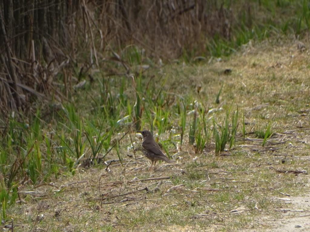 Birdwatching w Poleskim Parku Narodowym 22