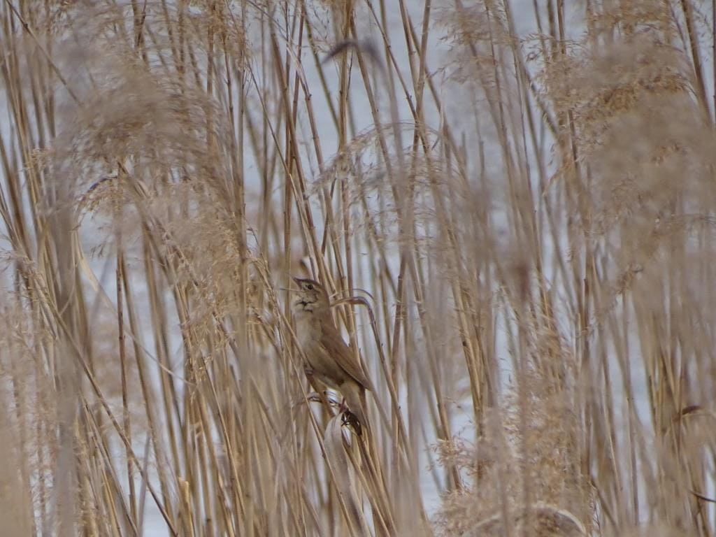 Birdwatching w Poleskim Parku Narodowym 4