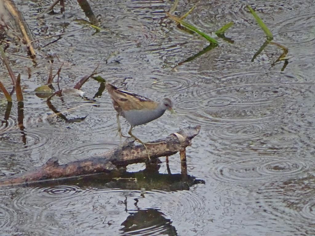 Birdwatching w Poleskim Parku Narodowym 12
