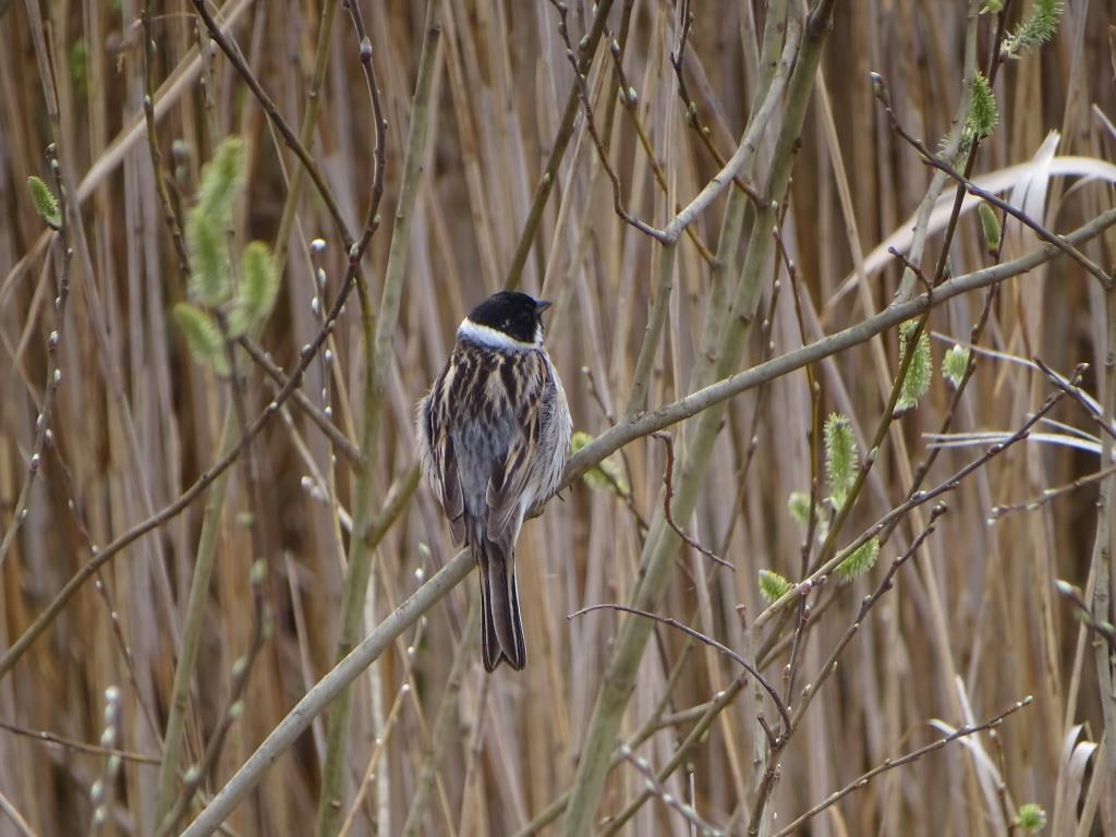 Birdwatching w Poleskim Parku Narodowym 8
