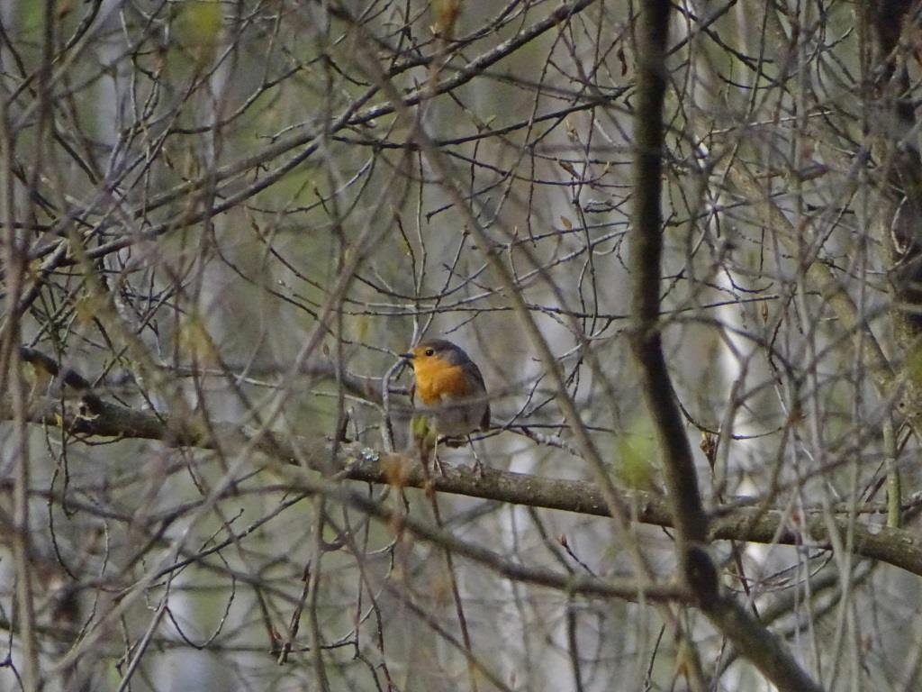 Birdwatching w Poleskim Parku Narodowym 18