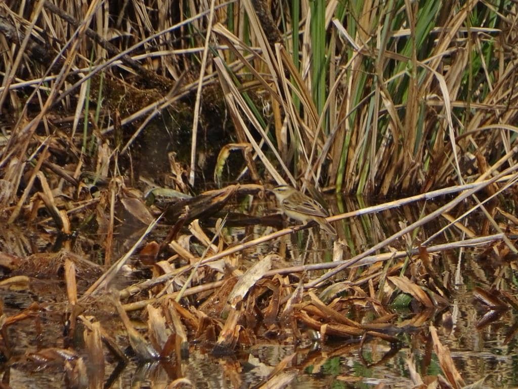 Birdwatching w Poleskim Parku Narodowym 26