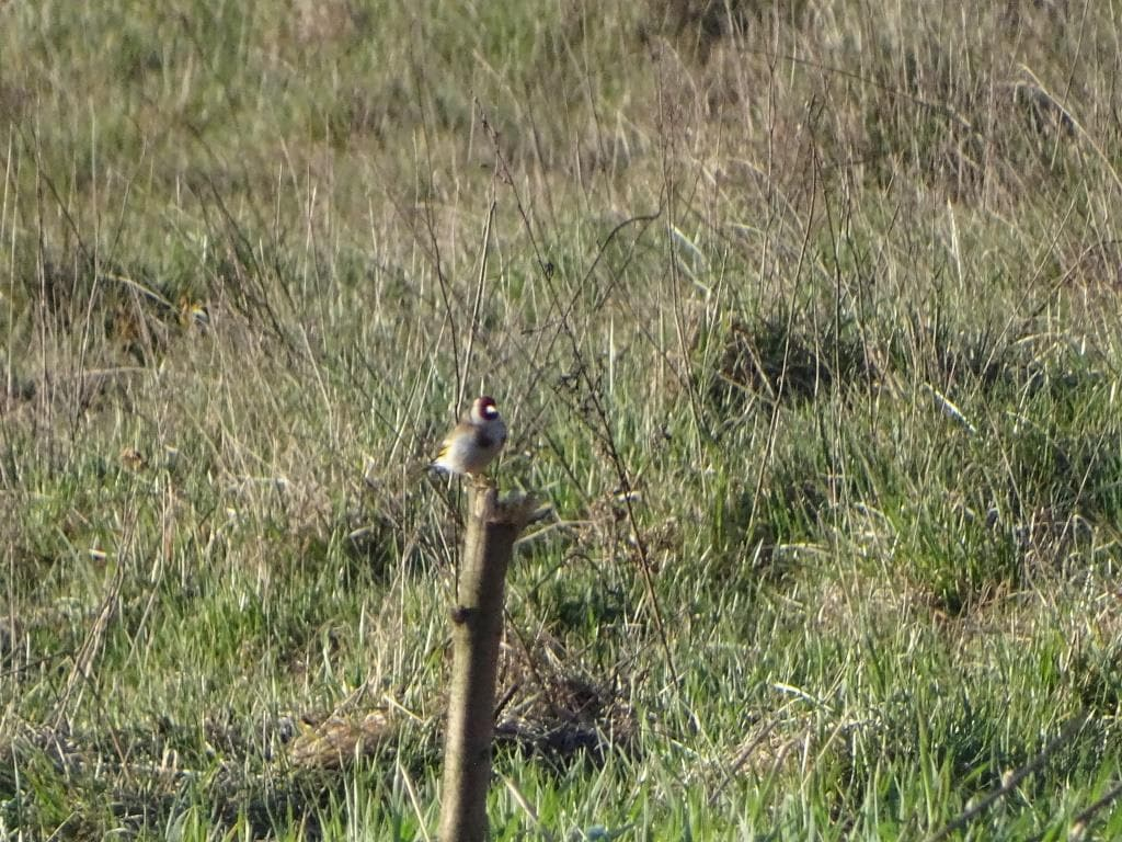 Birdwatching w Poleskim Parku Narodowym 23
