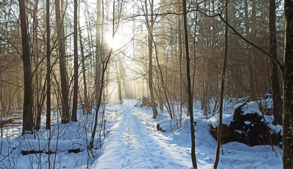 Puszcza Białowieska zimą 2