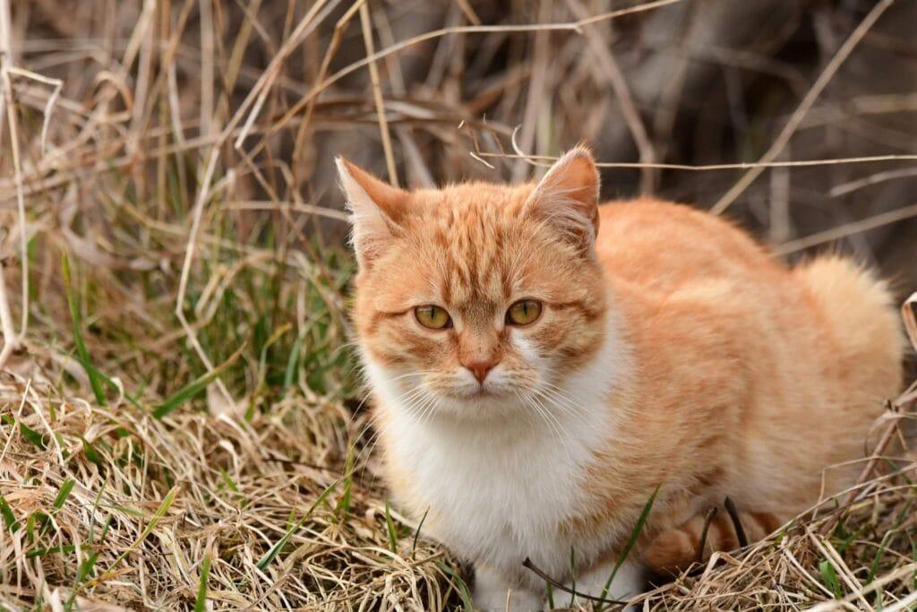 kot domowy - drapieżnictwo kota domowego