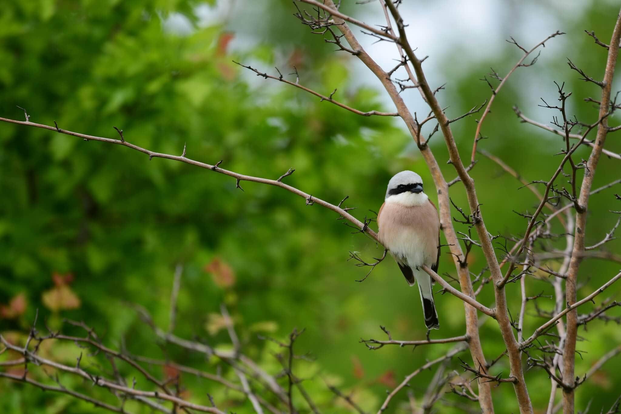 Ptaki - udokumentowane obserwacje 1