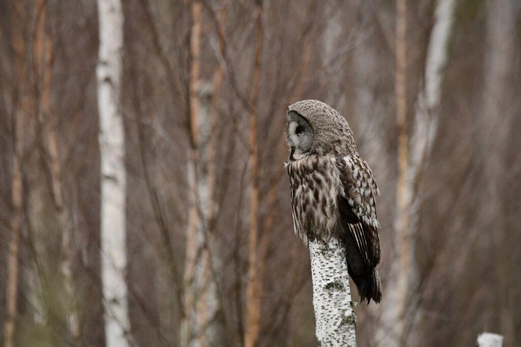 obserwacja ptaków - poszukiwanie rzadkich gatunków ptaków