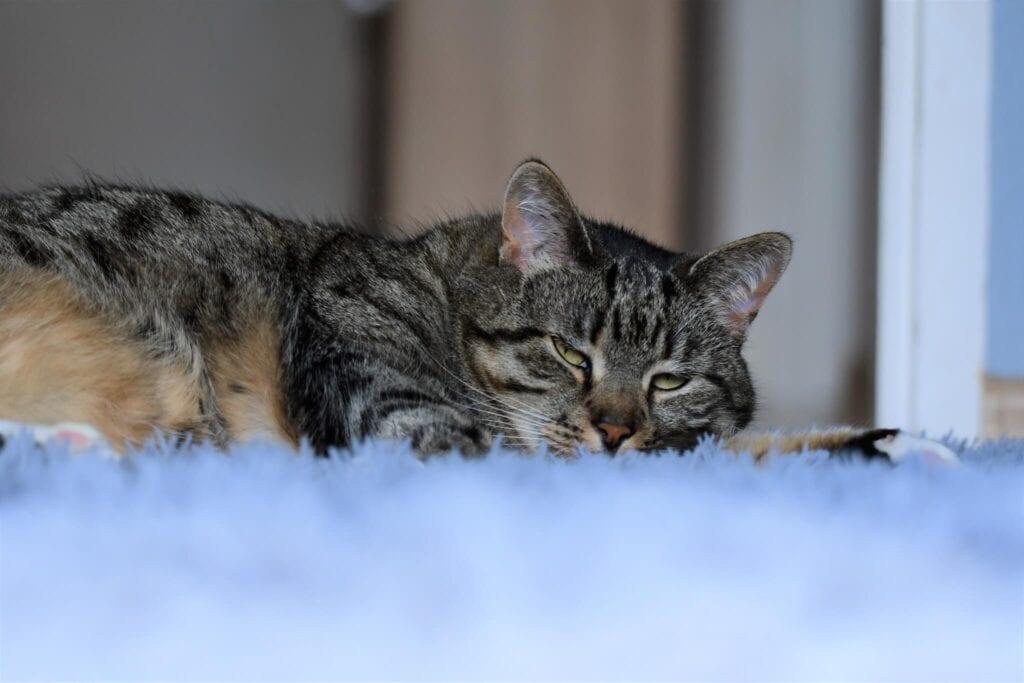 jak wychować kota