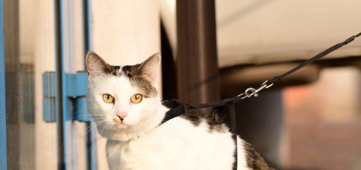 Jak wychować kota - wpływ zabawy z kotem na jego behawior 1