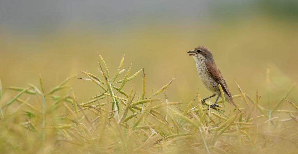 Dolina Bugu - birdwatching i test nowej lornetki 1