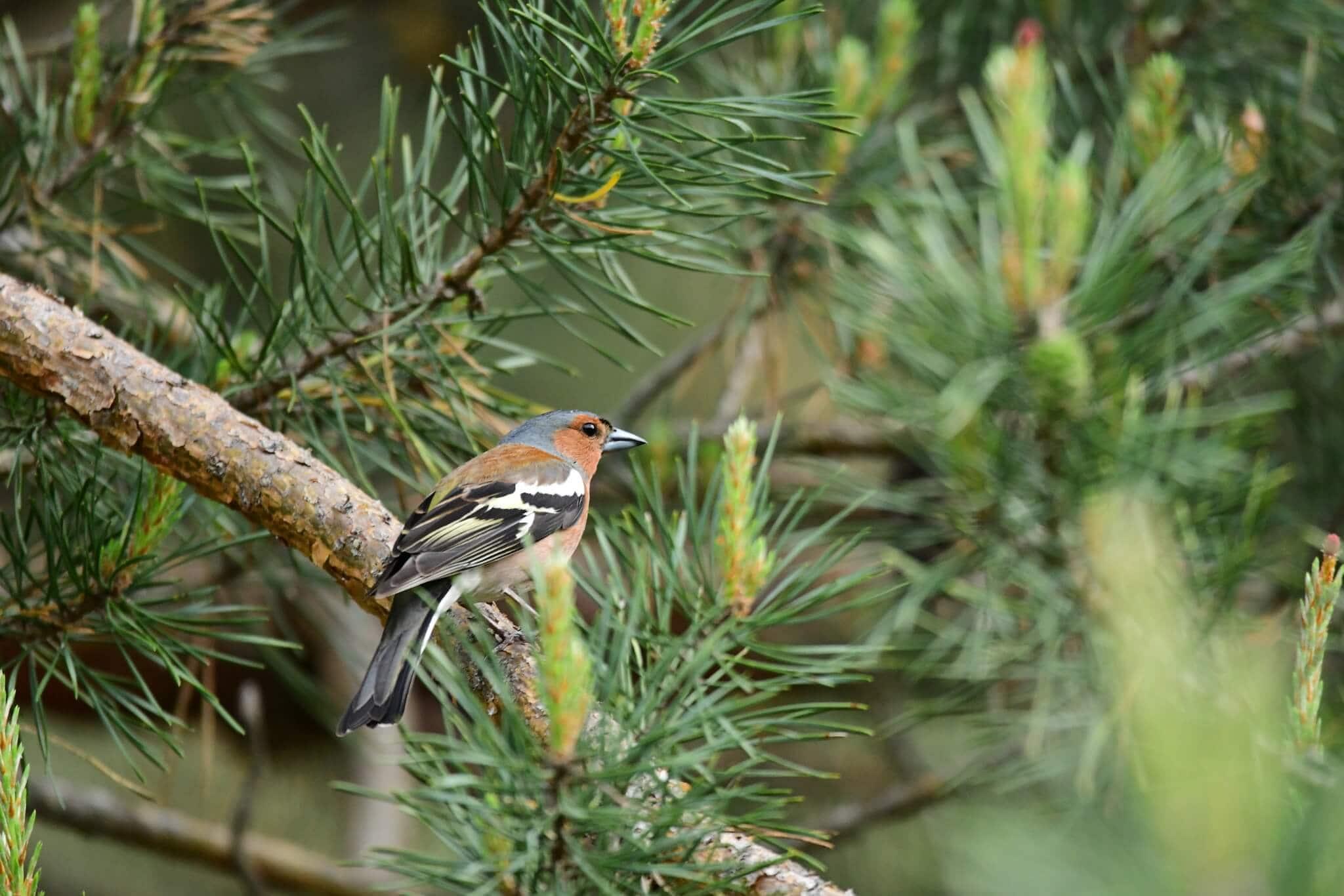Ptaki - udokumentowane obserwacje 2